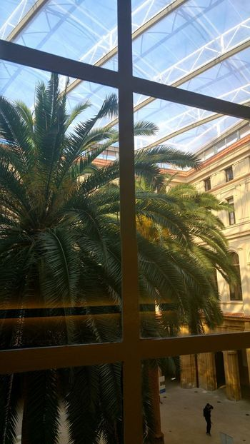 Built Structure Sky Reflection Palm Palm Trees Palm Tree Tree Architecture Deusto Windows Window Sunlight