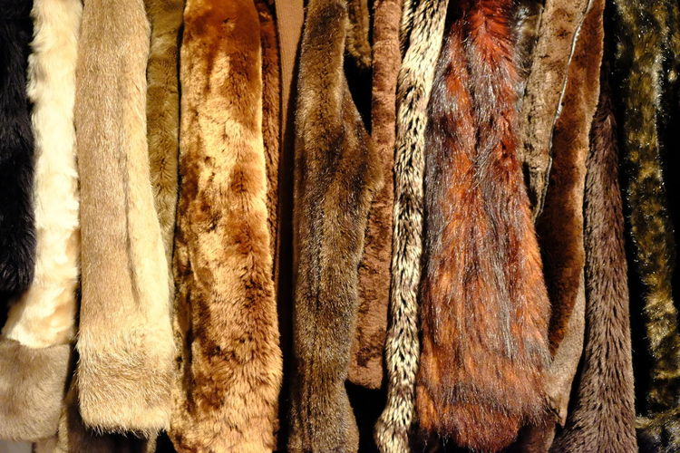 Cold Weather Second Hand Wintertime Animal Themes Animal Welfare Animals Backgrounds Brocante Clothing Clothing Store Coats Cold Cold Temperature Flea Market Fleamarket Fur Fur Coat Fur Coats Fur Jacket Skin Textile Textured