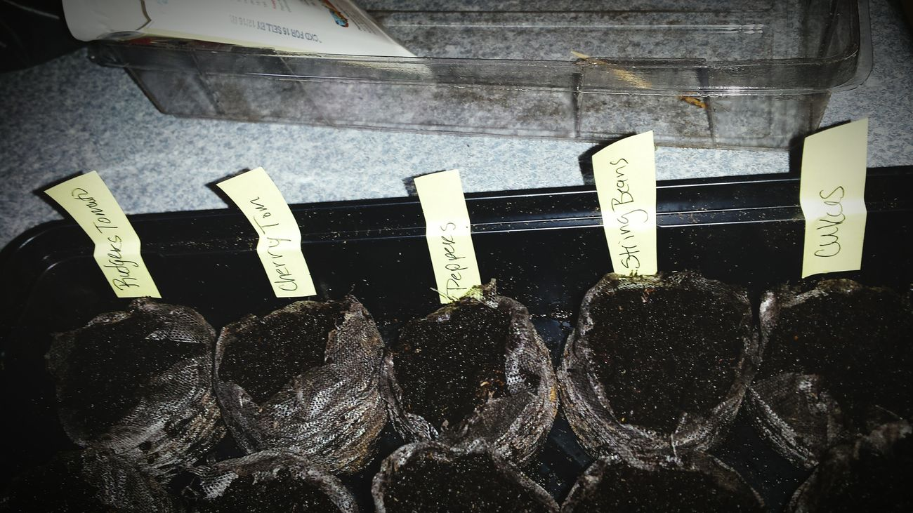Greenhouse Planting Seeds Spring