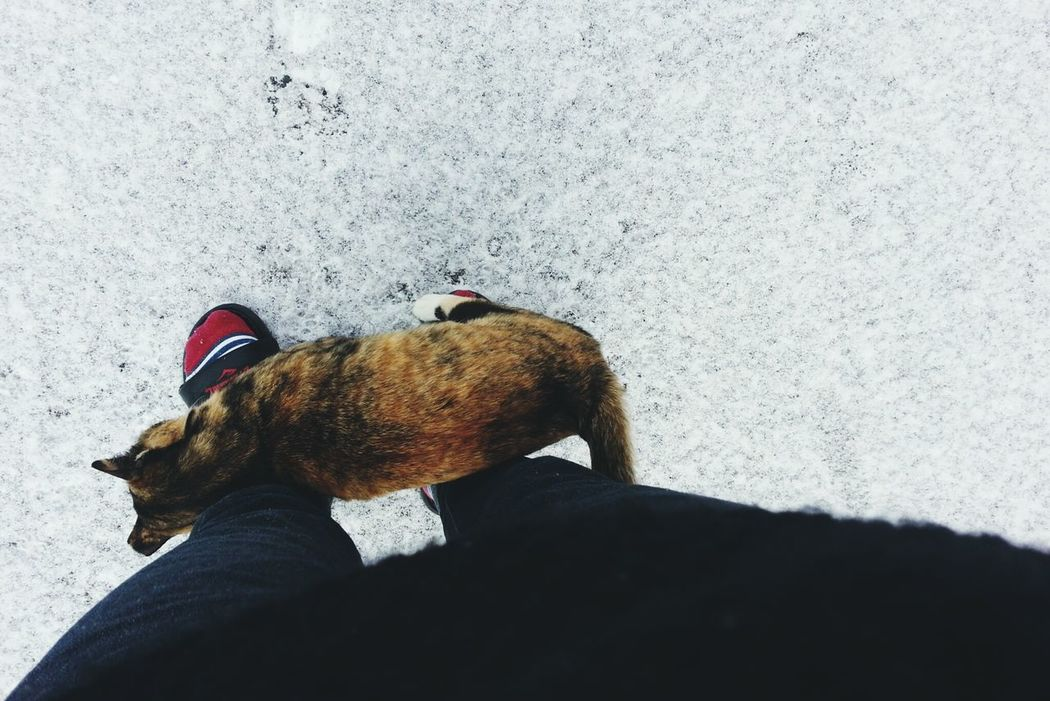 Cat♡ Cat Lovers With Cat Snowwhite 길냥이길냥이에겐 추운 겨울날.. 어제밤도 잘넘겼구나..