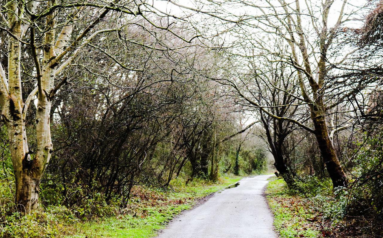 Bristol To Bath Railway Path Bristol Bath Path Nature Nature_collection Landscape_collection EyeEmNatureLover EyeEm Best Shots