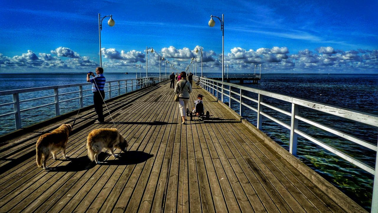 sea, railing, sky, water, nature, horizon over water, outdoors, day, wood paneling, animal themes, no people, mammal