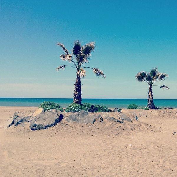 Ladispoli Cerveteri Mare Sun Sea Instadaily Instagramers Instahub Instagramhub Instamood Instaitalia Italy Sabbia Instagood Good Igers Photooftheday Picoftheday Webstagram Tagstagram