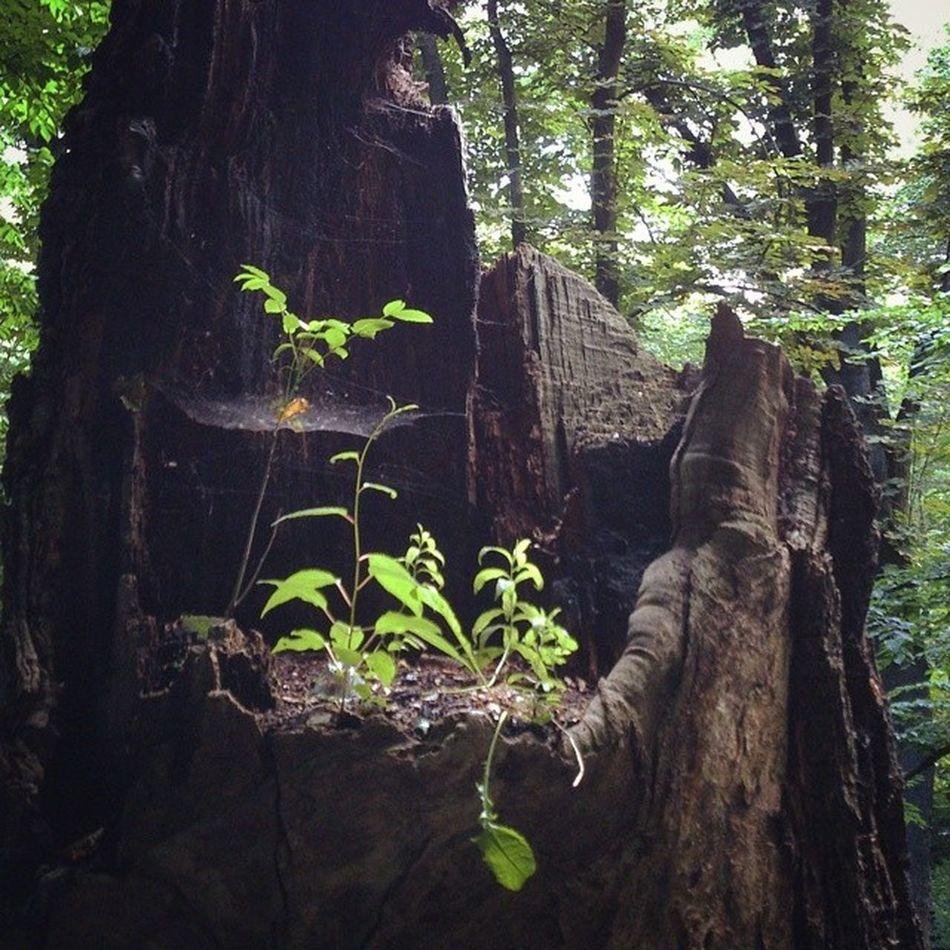 Новое поколенин выбирает натуральное дерево сырец Киев город Syrets forest forest_trip лес дневник_наблюдателя kiev insta_kiev kievblog thekievblog wowkiev kievgram природа nature