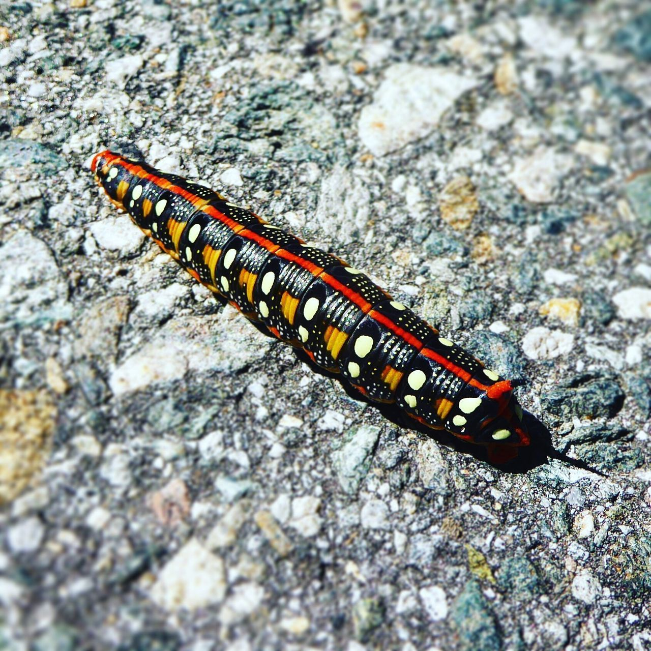 Animal Themes One Animal Animals In The Wild Insect No People Close-up Outdoors Animal Wildlife Day Caterpillar Nature
