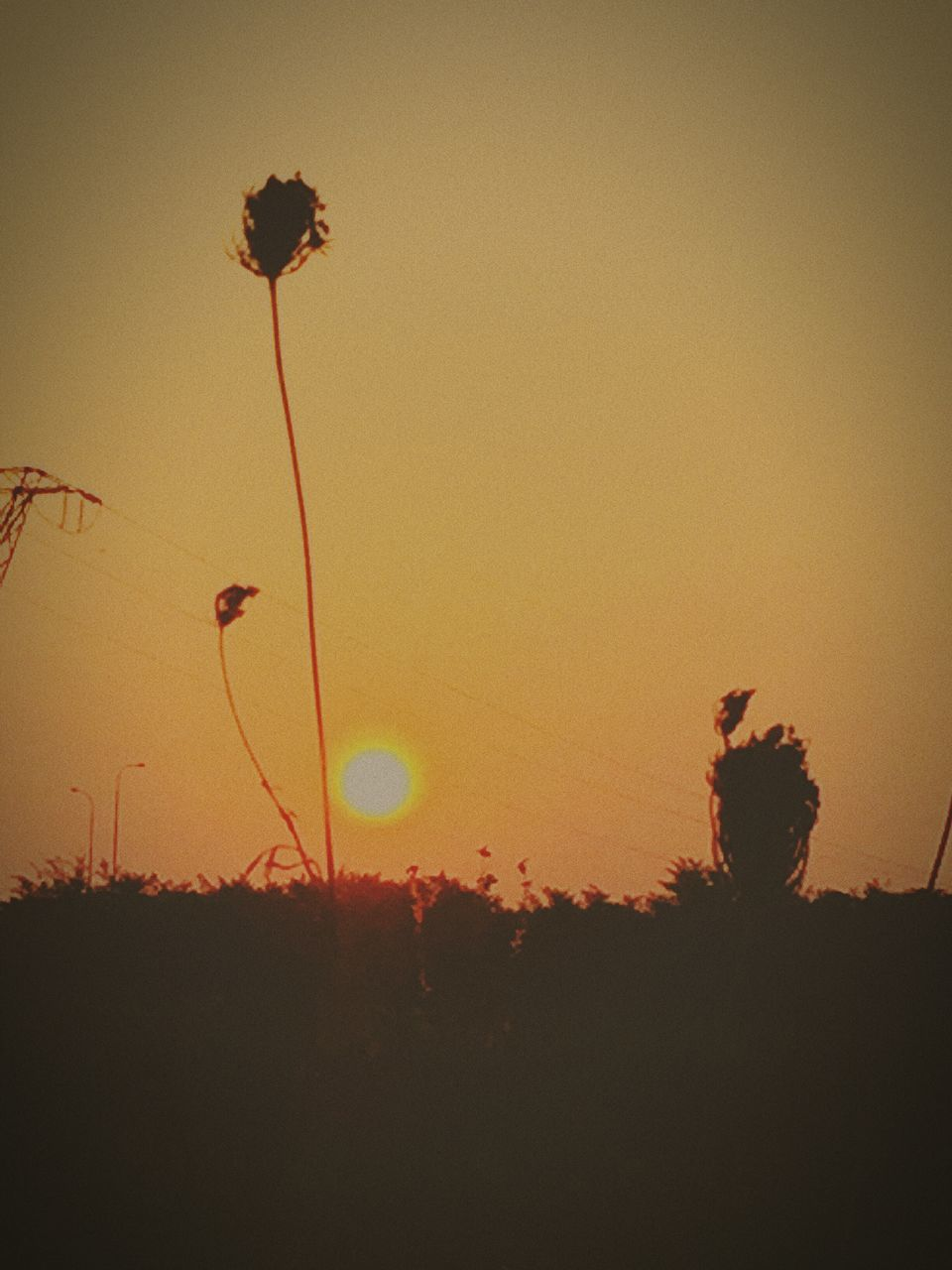 sunset, silhouette, nature, growth, beauty in nature, sun, outdoors, plant, no people, clear sky, tranquil scene, scenics, tranquility, field, tree, sky, landscape, sunlight, flower, grass, day
