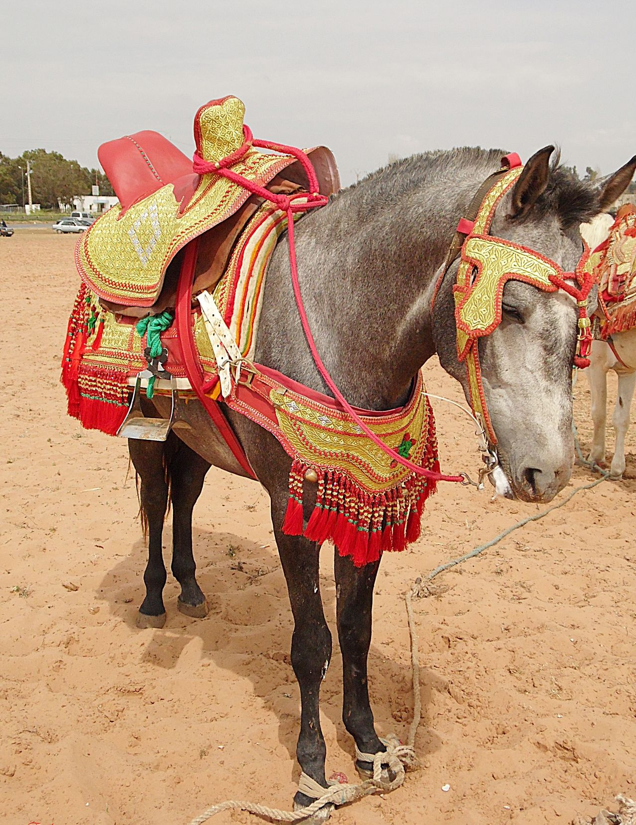 Animal Themes Artisanale Artisanat Broderie Cheval Day Domestic Animals Elephant Fantasia Fantasie Full Length Low Section Mammal No People One Animal Outdoors Standing Working Animal