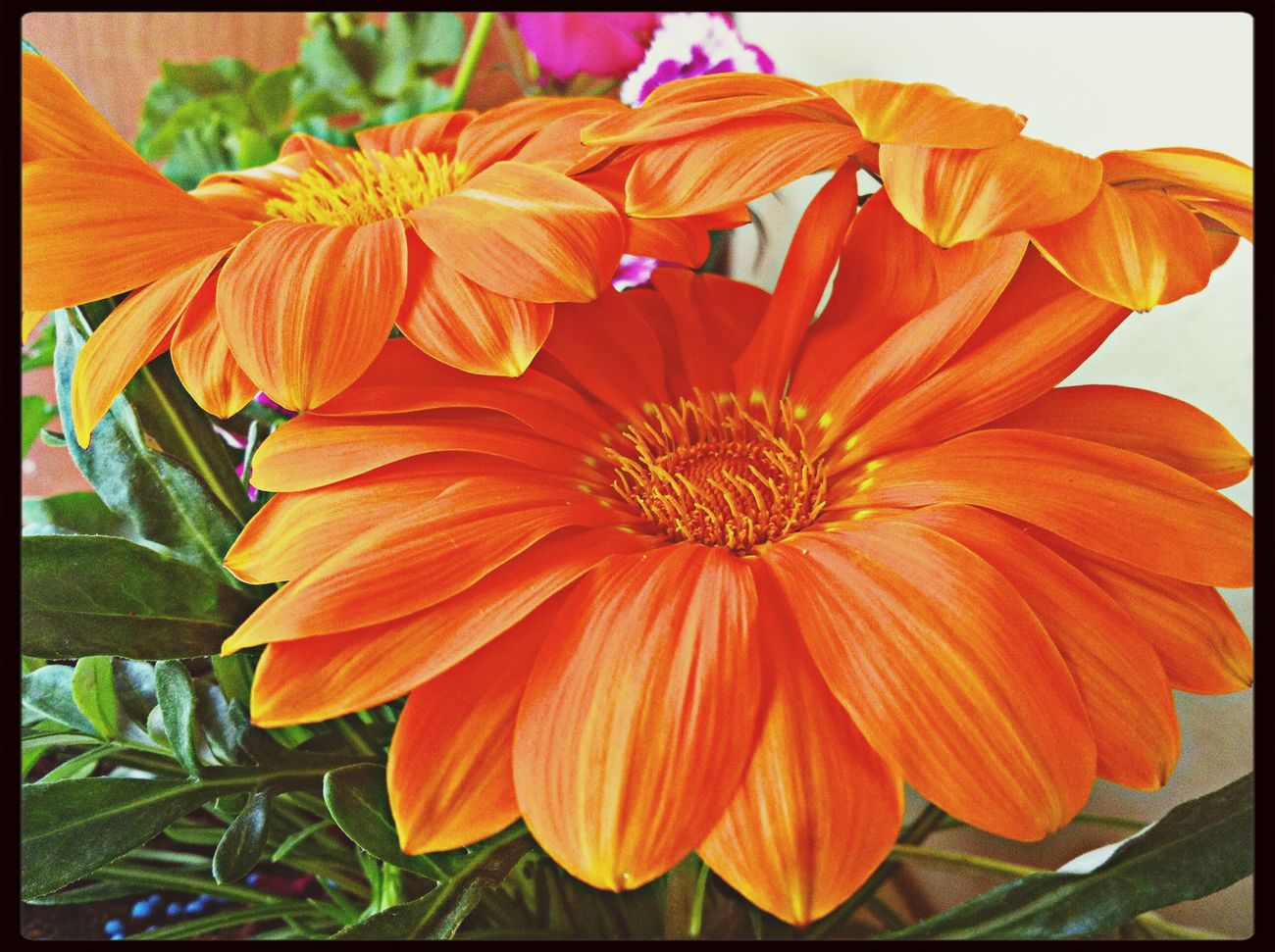 Flower Spring Nature IPhone