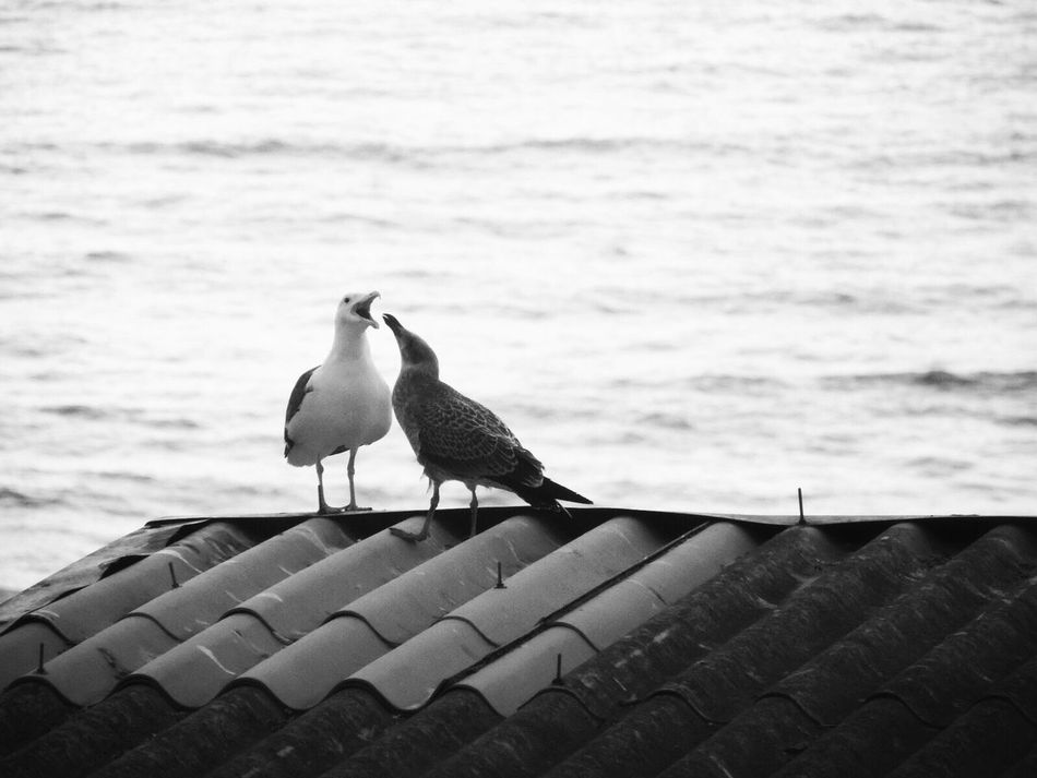 Flirty  Birds_collection Birds Black & White Blackandwhite Photography Blanco Y Negro Blanco & Negro  Outdoors Capture The Moment