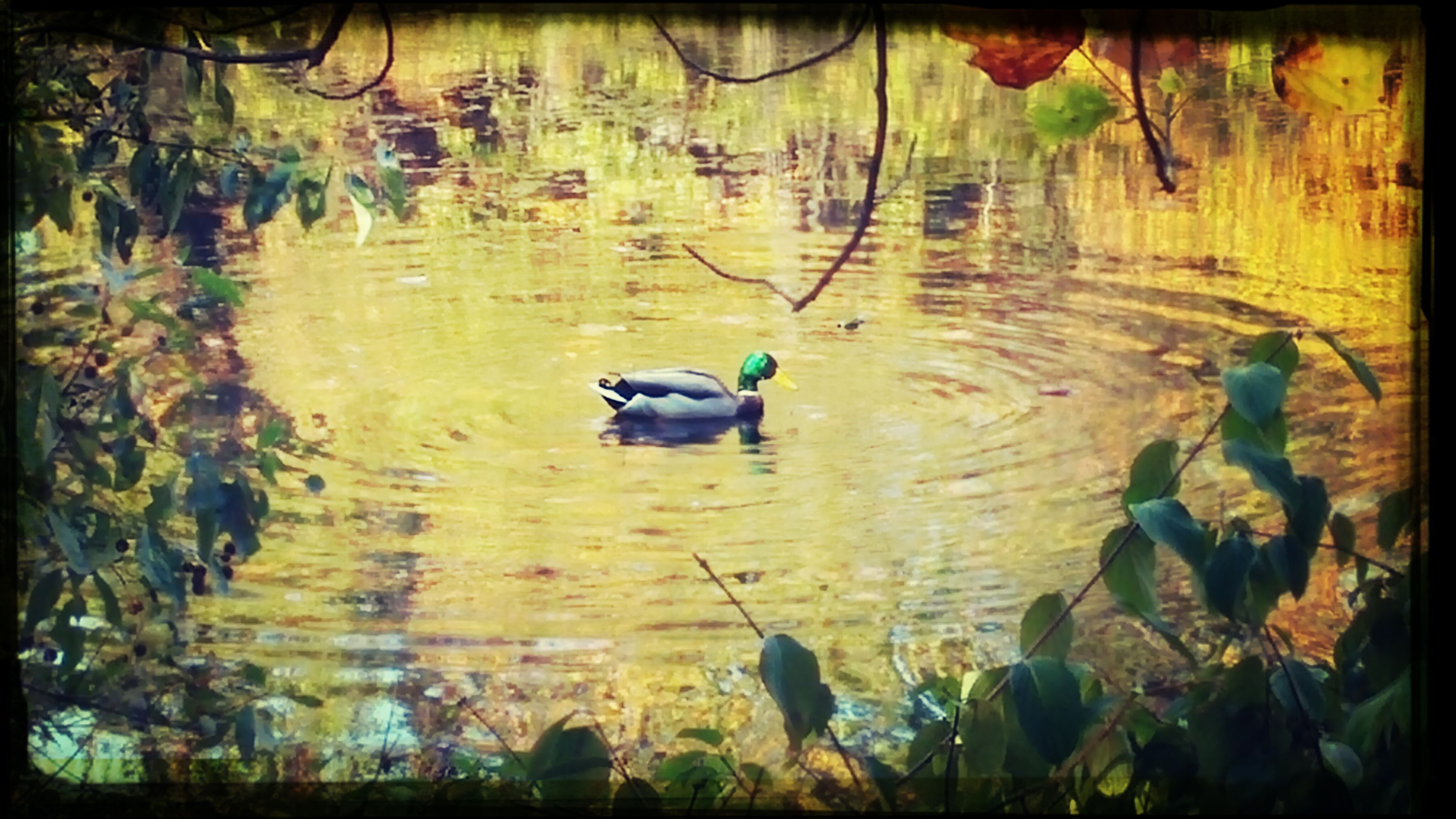 The Calmness Within Pond Of Tranquility First Eyeem Photo