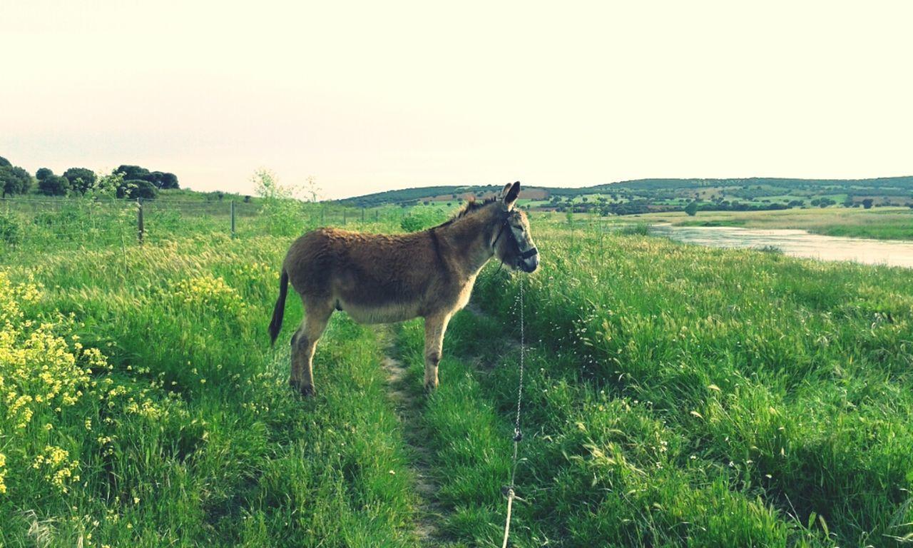 Out of my way! (donkey says) Having Fun River Mountain Biking Donkey