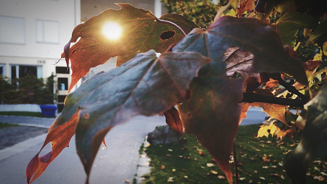 Glitch Sunrise Sun Bright Lights On A Stroll EyeEm Nature Lover