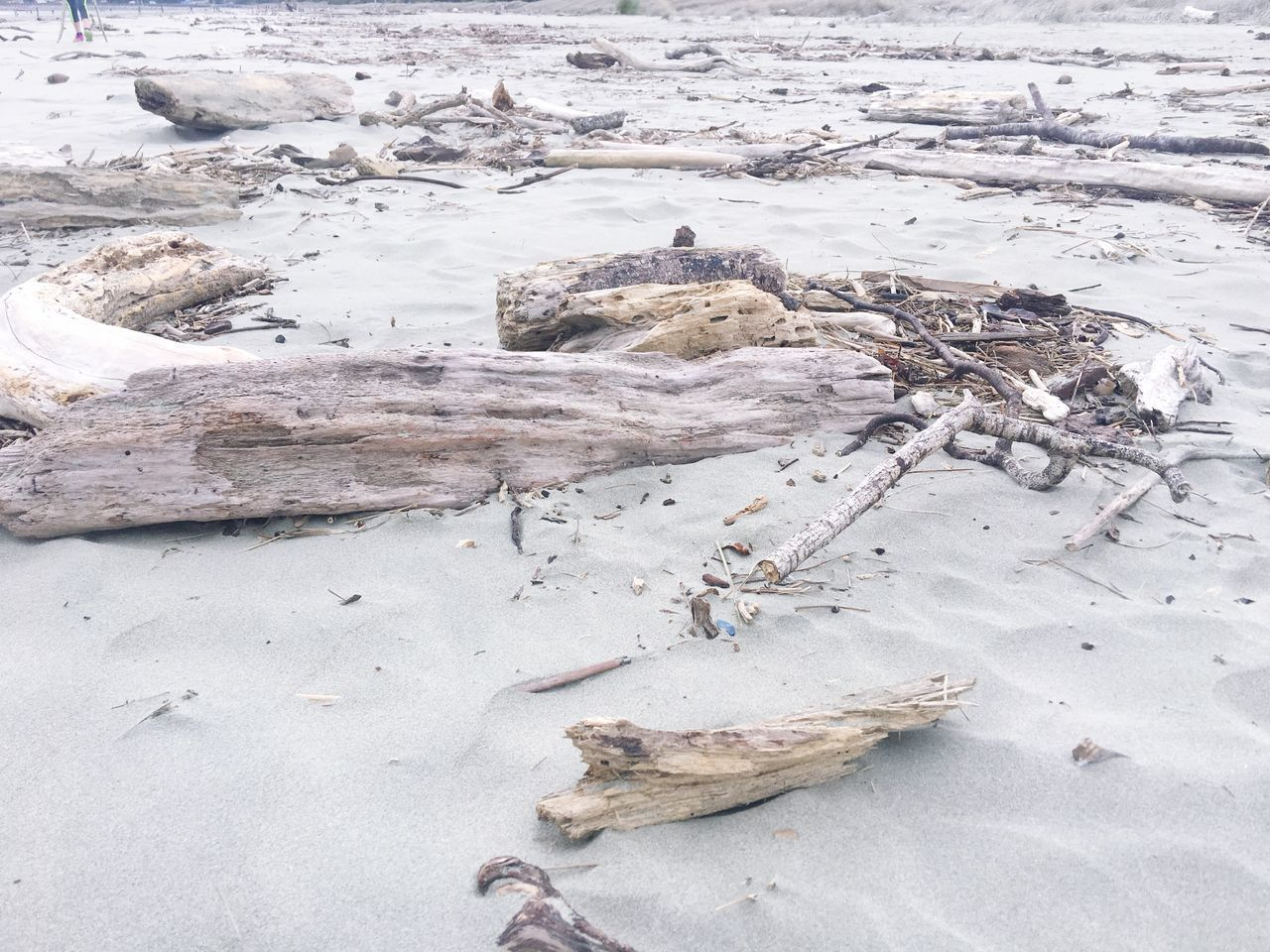 Driftwood debris on the beach Nature Coastal Feature Beach Beachphotography Sand Driftwood