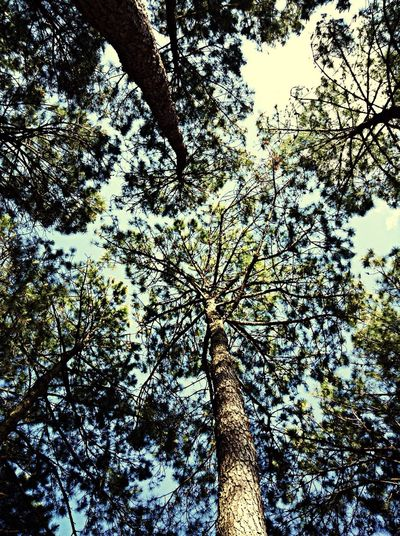 Relaxing uder the trees First Eyeem Photo