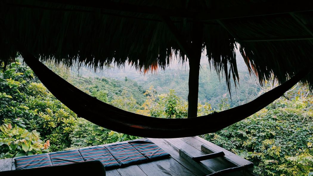 Proyecto de Hostel en la Beauty In Nature Close-up Outdoors Jungle Hostel View View Sommergefühle