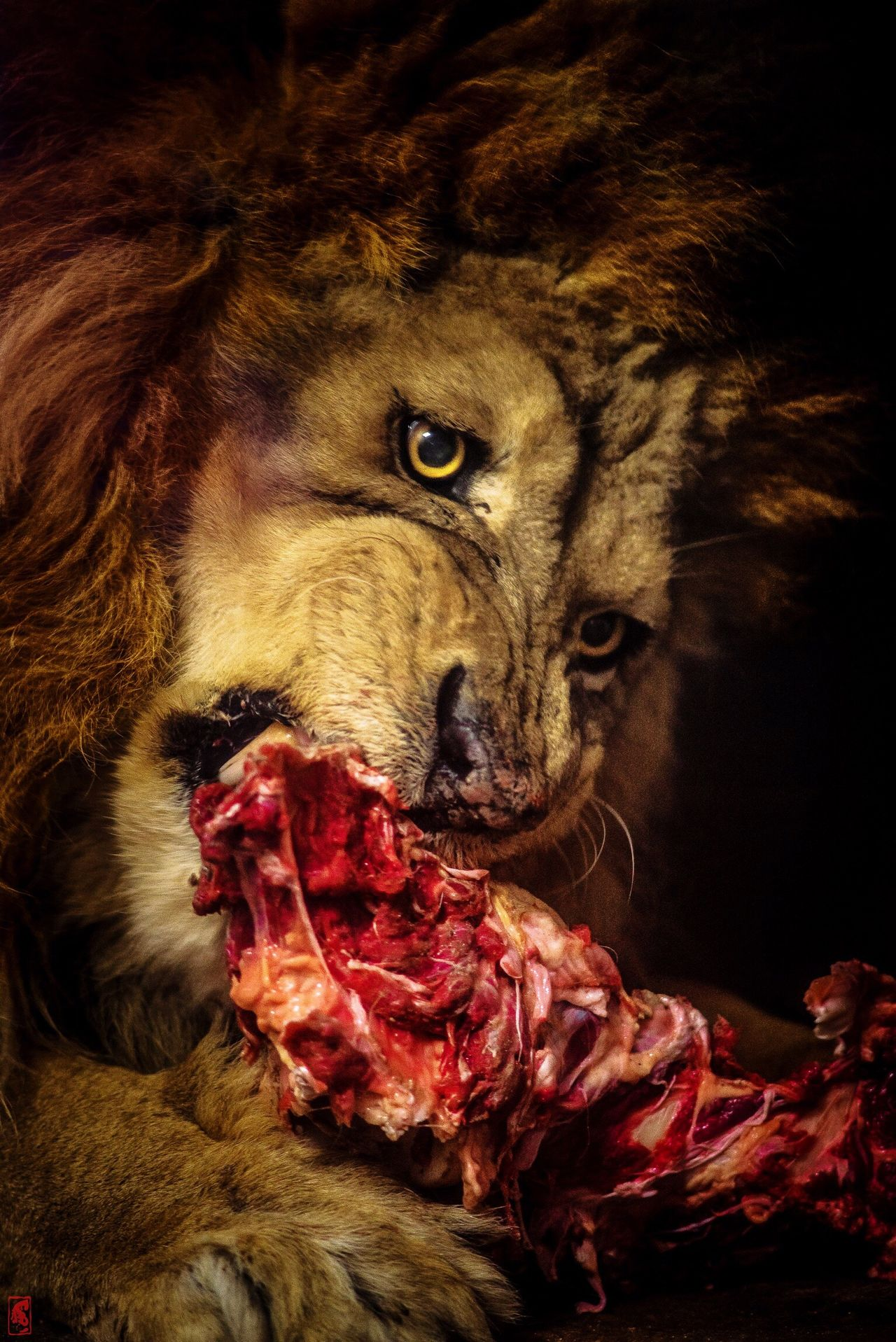Leo Horror Animal Evil Shock Close-up Animal Themes No People Outdoors Mammal Wild Wildlife & Nature Wildlife Photography Artistic Art
