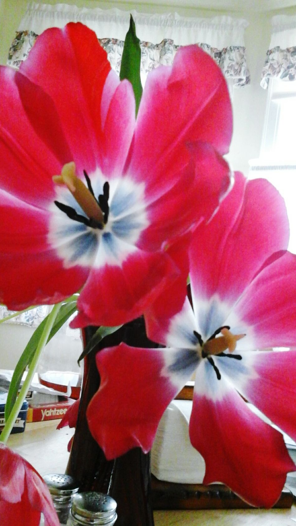 Better Look Twice Awesome_shots Sopretty Nature Luver Daily_captures Nature_collection Tulip Power! Every Picture Tells A Story Freelance Life Repeating Patterns
