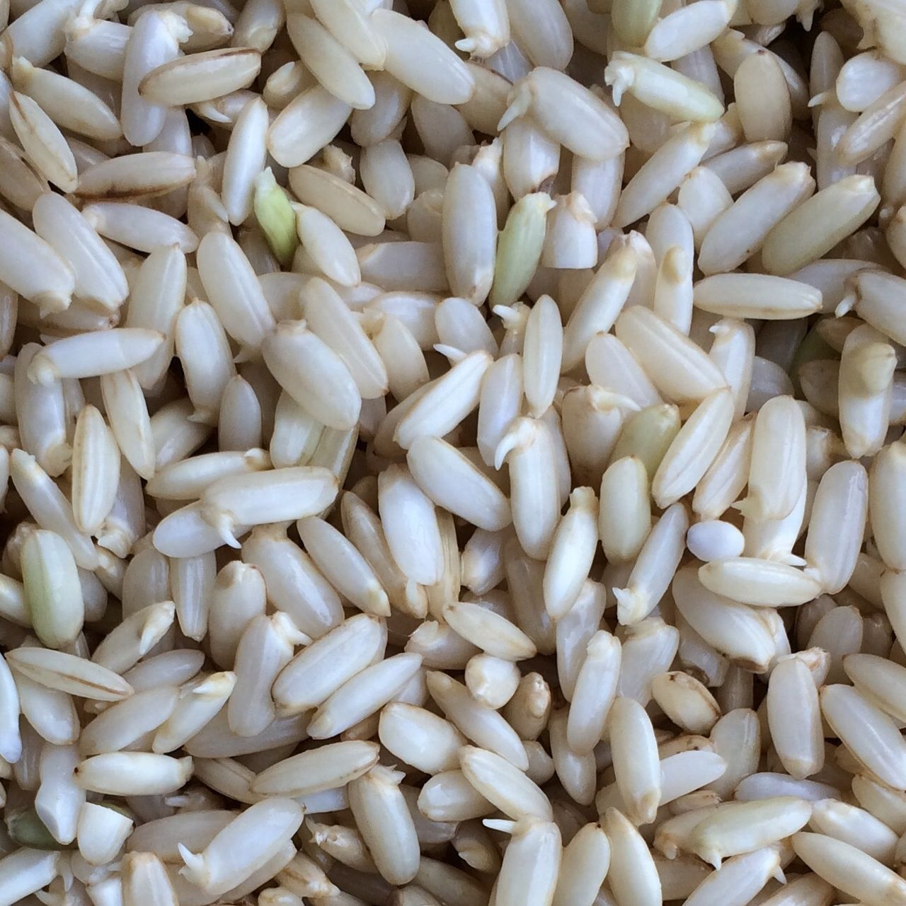Nerd food 2.0, sprouted rice! Healthy Food Nutrition Germinated Rice