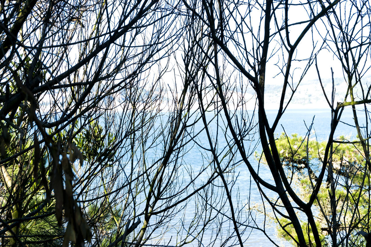 Bare Tree Beauty In Nature Branch Day Forest Lagoa De óbidos Low Angle View Nature No People Outdoors Scenics Sky Tranquil Scene Tranquility Tree