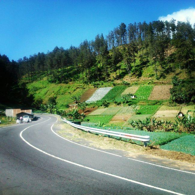 Starting A Trip VillageRoad Trees Mountain INDONESIA Surakarta Start A Trip