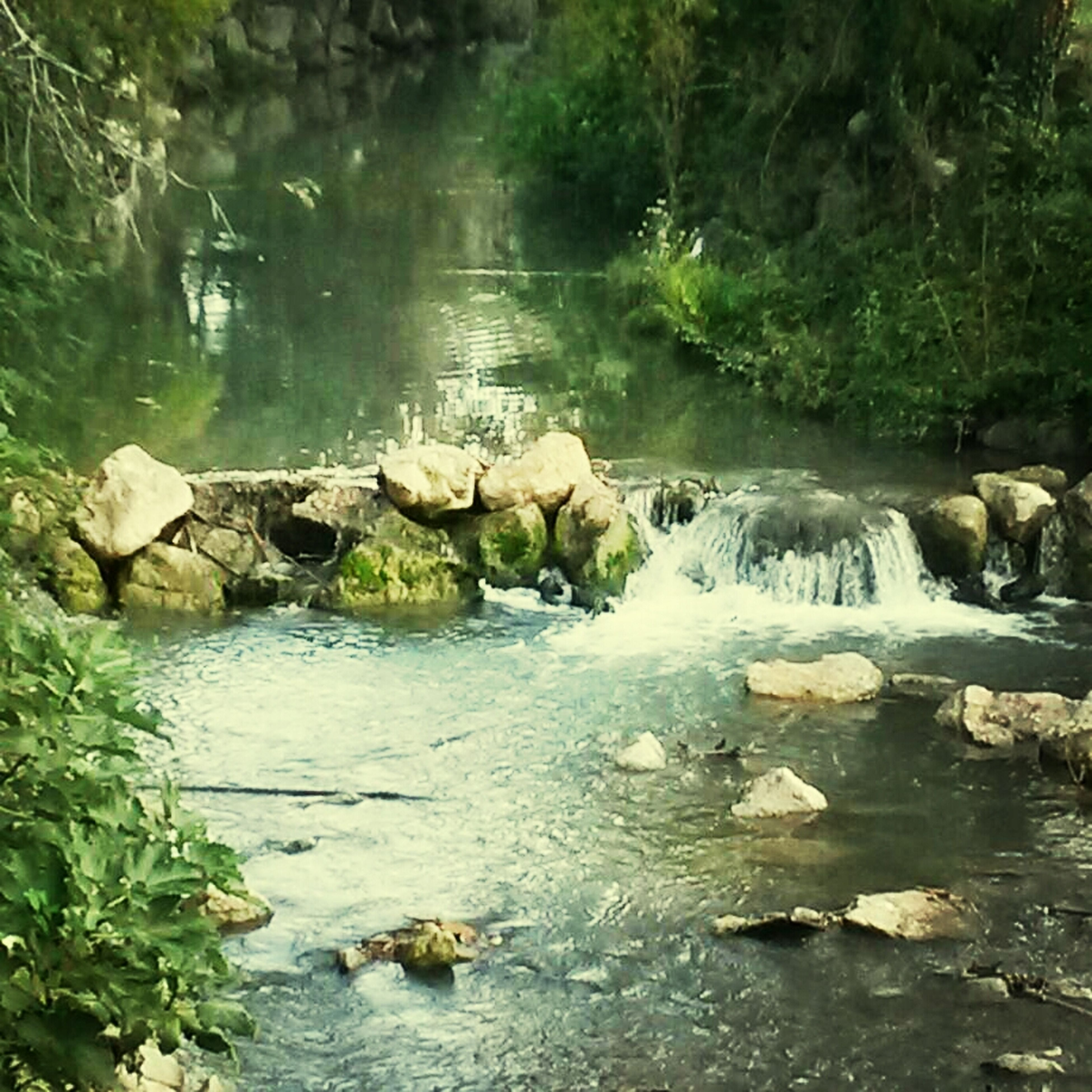 water, rock - object, tranquility, reflection, nature, beauty in nature, tranquil scene, lake, forest, stream, scenics, waterfront, river, rock, tree, idyllic, day, outdoors, no people, non-urban scene