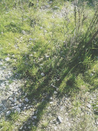 Plants Marii