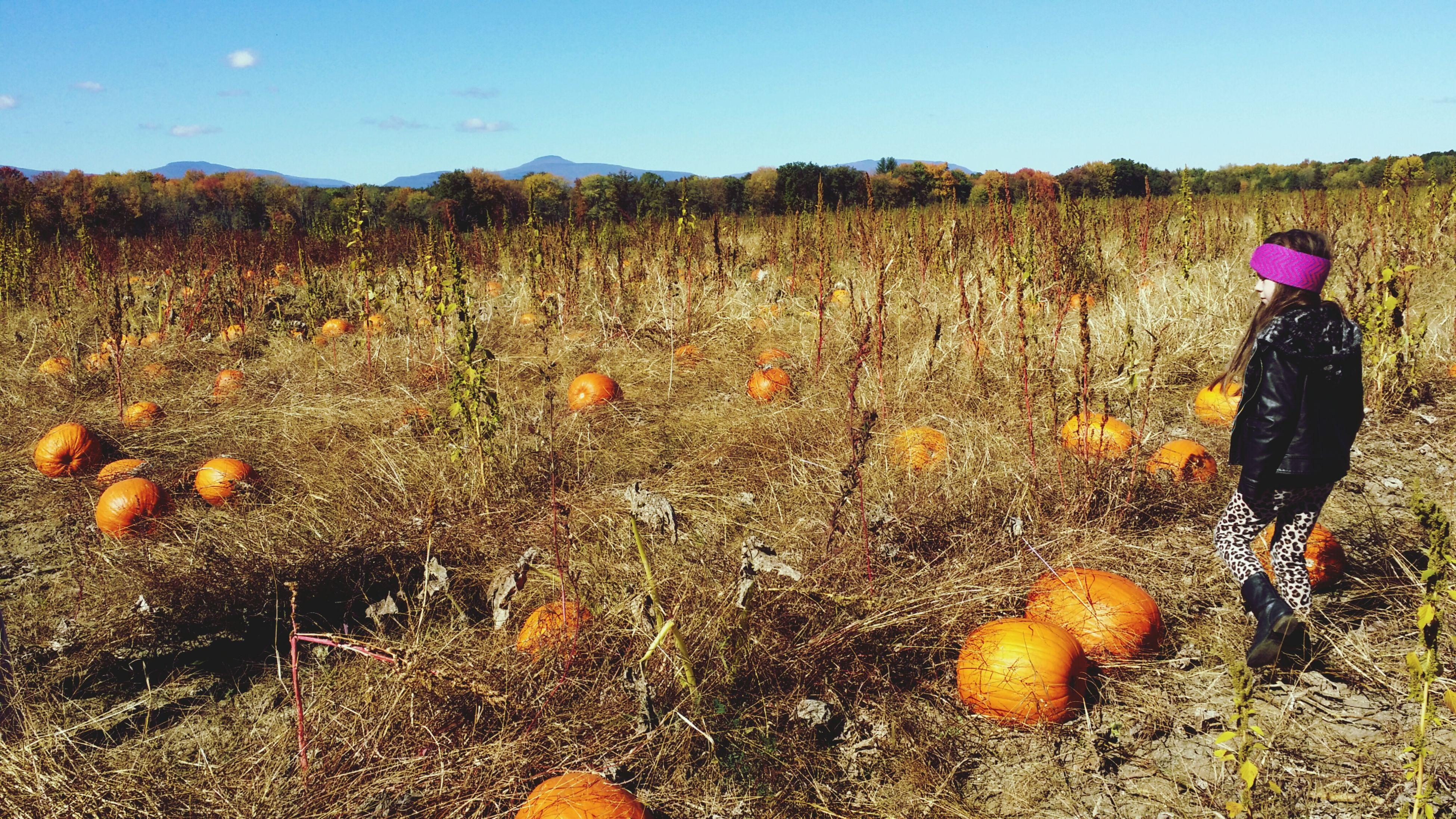 Pumkin patch in Rhinebeck, NY Greigfarm Pumpkin Patch Pumpkins Fall