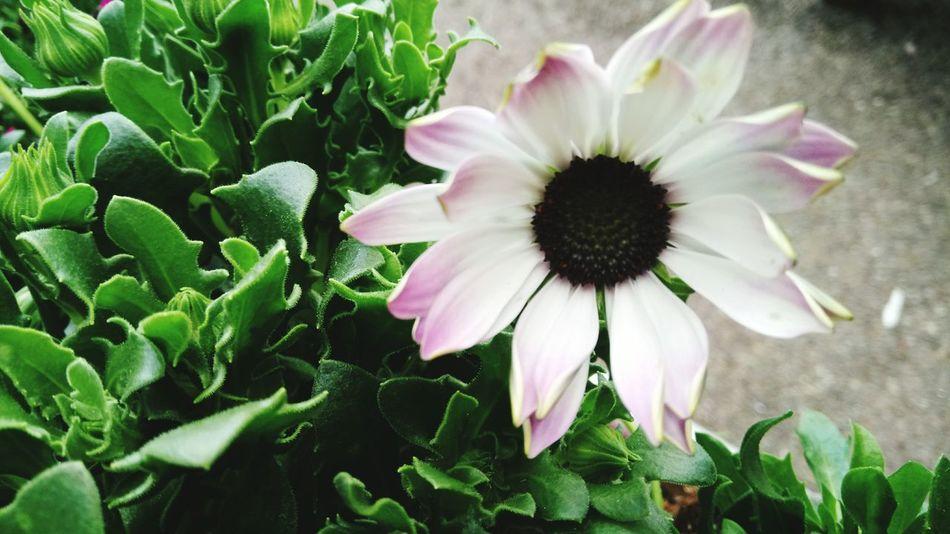 ALONE🌸 Fragility Flower Freshness Beauty In Nature 🌿☘️🌲🍃