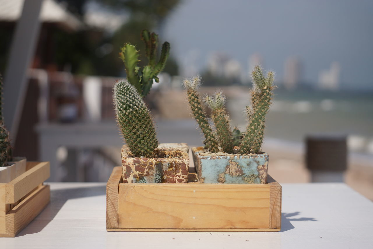 focus on foreground, cactus, plant, nature, table, potted plant, growth, sunlight, no people, outdoors, day, beauty in nature, close-up, sky