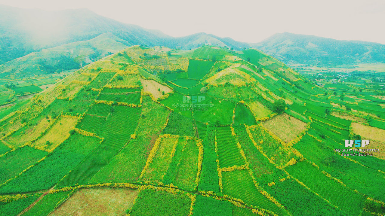 agriculture, rural scene, landscape, farm, tranquil scene, cultivated land, field, beauty in nature, scenics, nature, green color, tranquility, patchwork landscape, aerial view, crop, no people, outdoors, day, sky