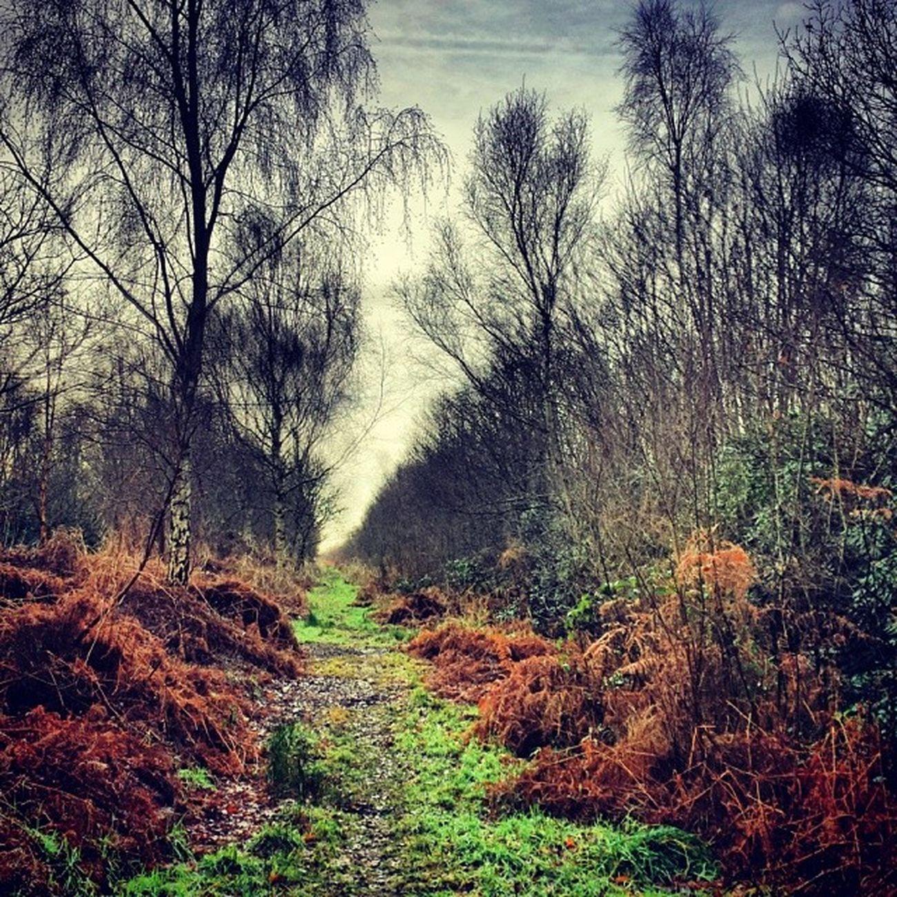Love my walks over the moors