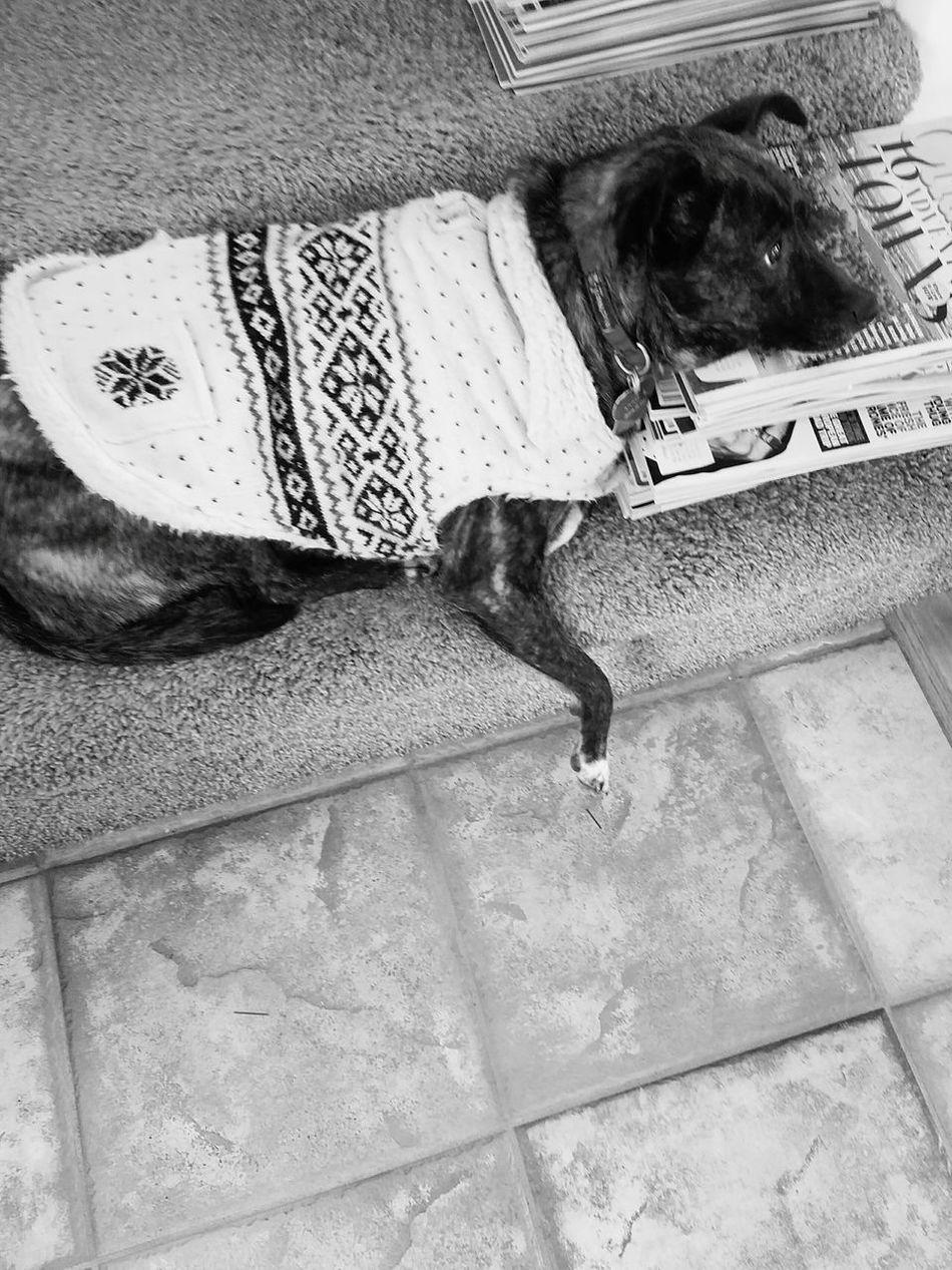 She found a place to rest her head.. Pets Lazysunday Lovemydog Dogslife