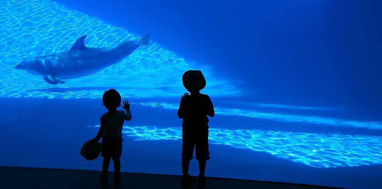 Dolphin Silhouette Aquarium Children Photojournalist Children Playing Children Watching Blue Marine Life Maritime Photography
