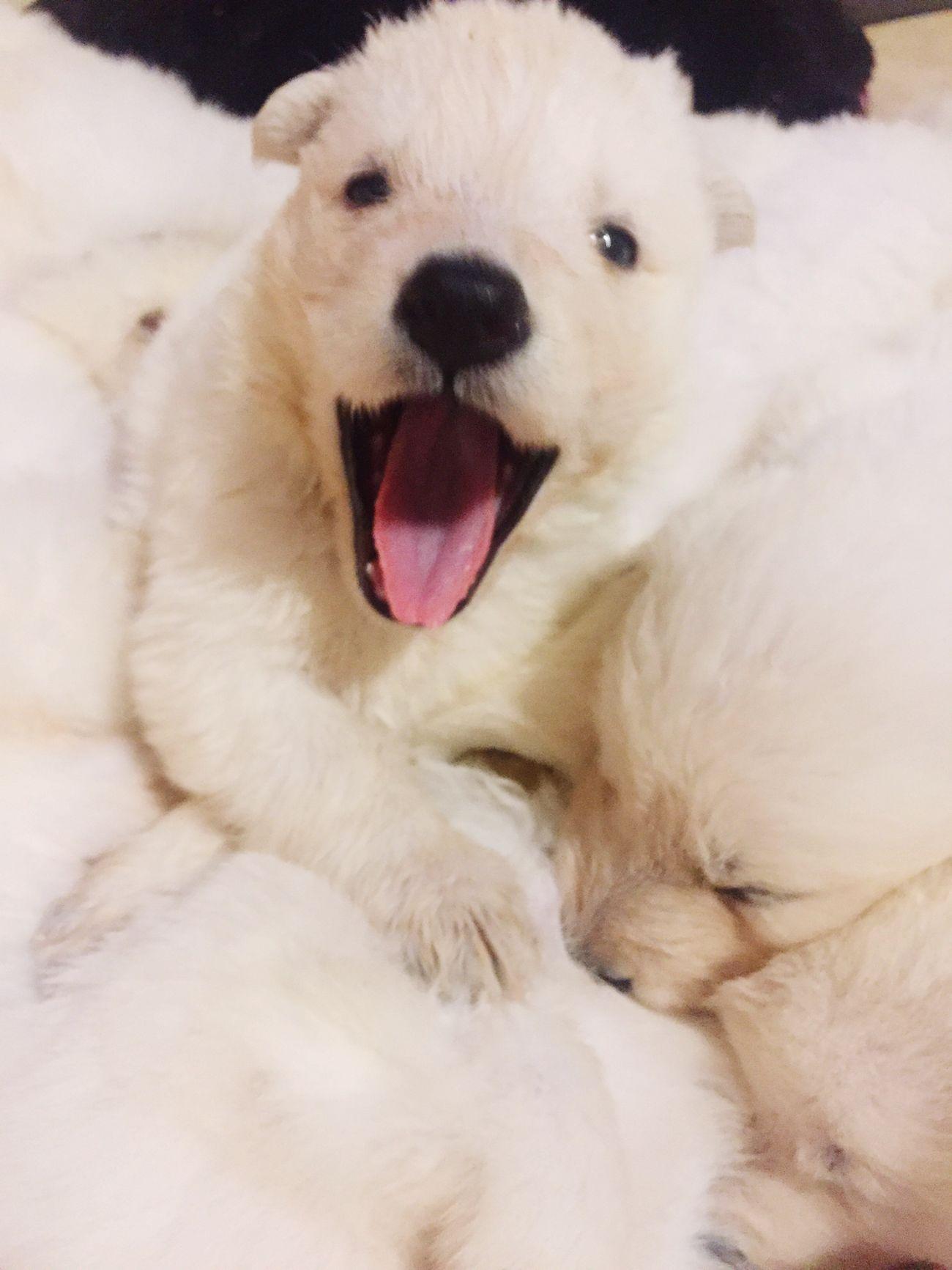 Babydog Cuteness Littledog White Beauty First Eyeem Photo
