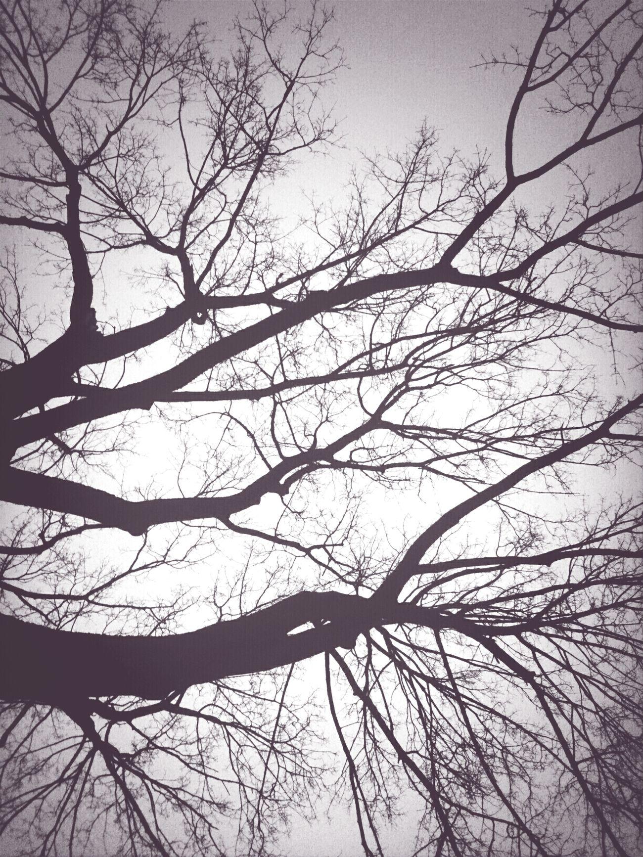 stillness Evening Trees