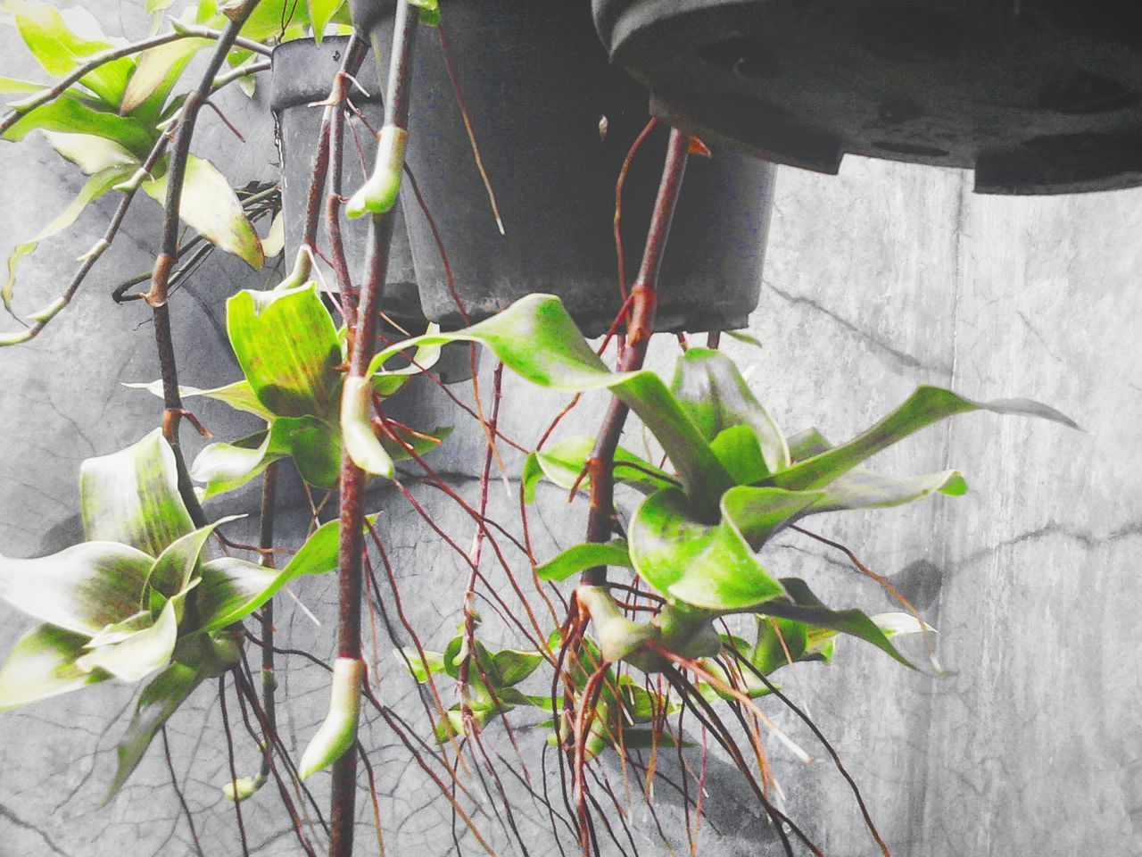Leaf Plant Growth Nature No People Green Color Outdoors Close-up Beauty In Nature Day Freshness