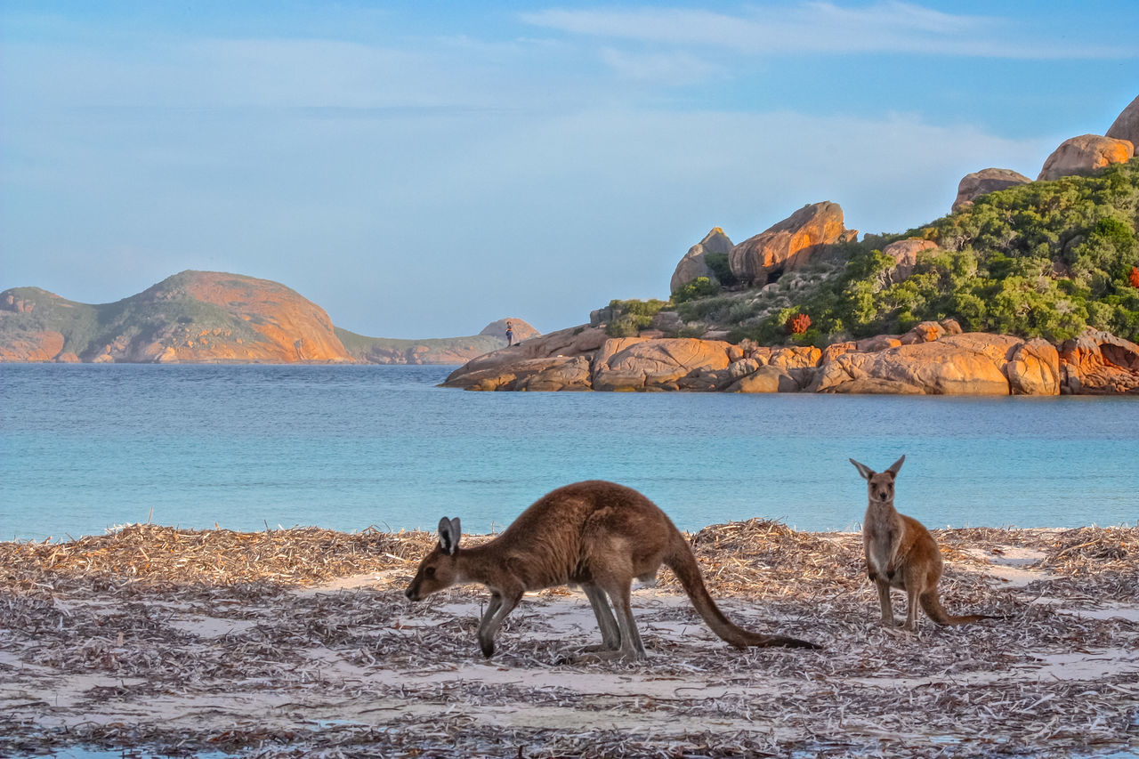 Beautiful stock photos of australien, Animal Family, Animal Themes, Animal Wildlife, Animals In The Wild