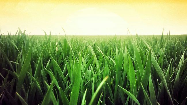 Fields Sunny