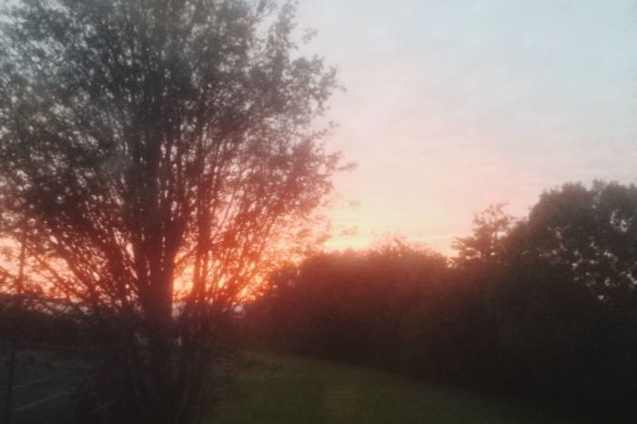 Taking Photos Nature View Beautiful Trees Sky Happy Grass Sunset