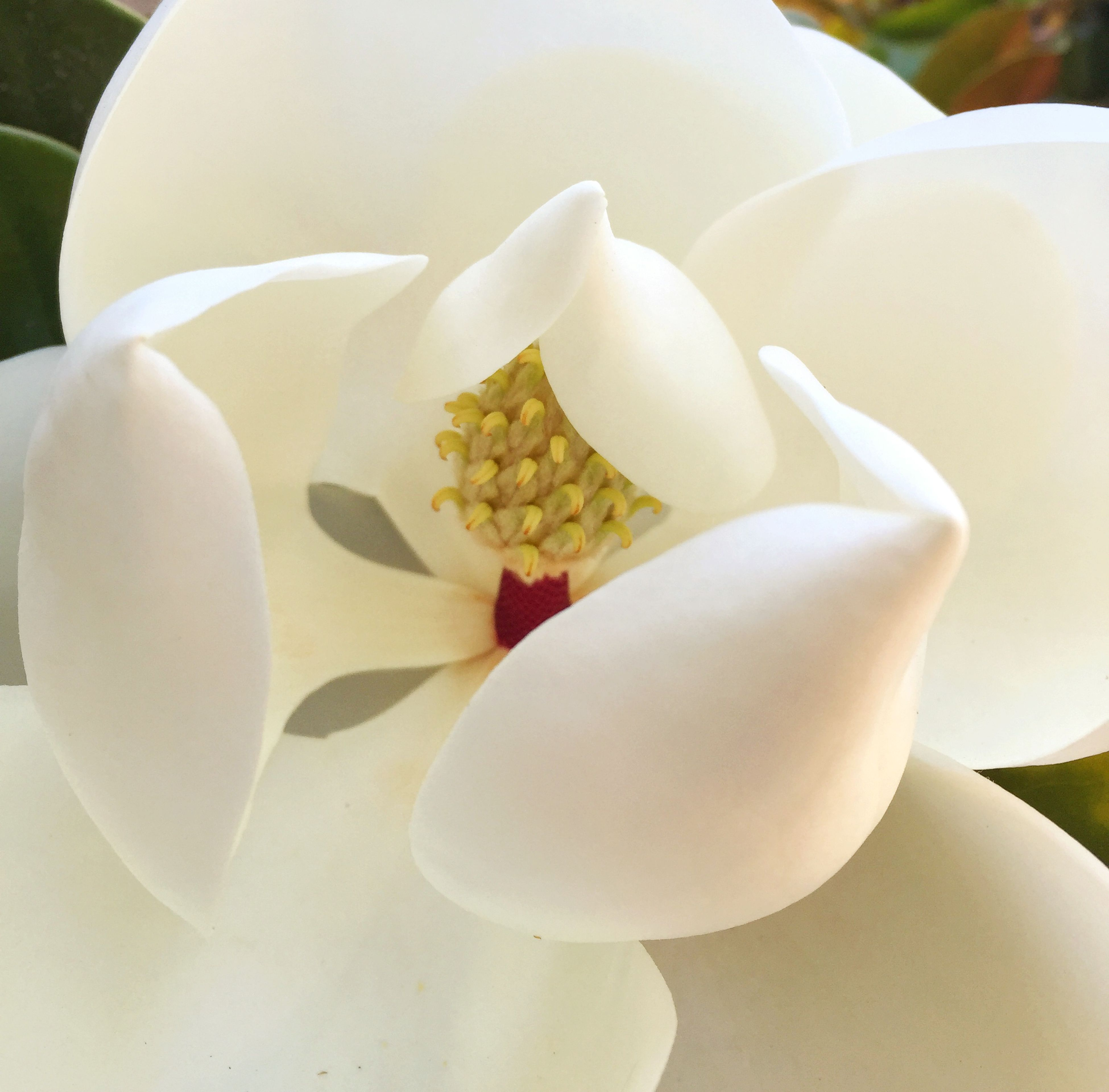 flower, freshness, fragility, petal, white color, close-up, flower head, white, macro, stamen, blossom, beauty in nature, simplicity, springtime, extreme close-up, single flower, backgrounds, botany, magnolia, in bloom, exoticism, softness, growth, nature, full frame, pollen, pistil, no people