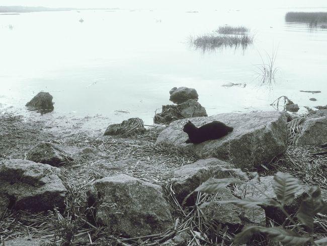 Котиков всё больше и большеBlackandwhite Cat Water Silhouettes