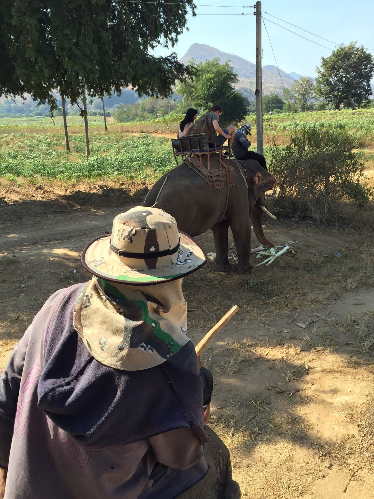 Adventure Buddies Our guide on elephant trekking in Thailand. Check This Out Travel Travelling Unique Tadaa Community Thailand Animals Nature Elephant Adventure Elephant Trekking Adventure Club On The Way