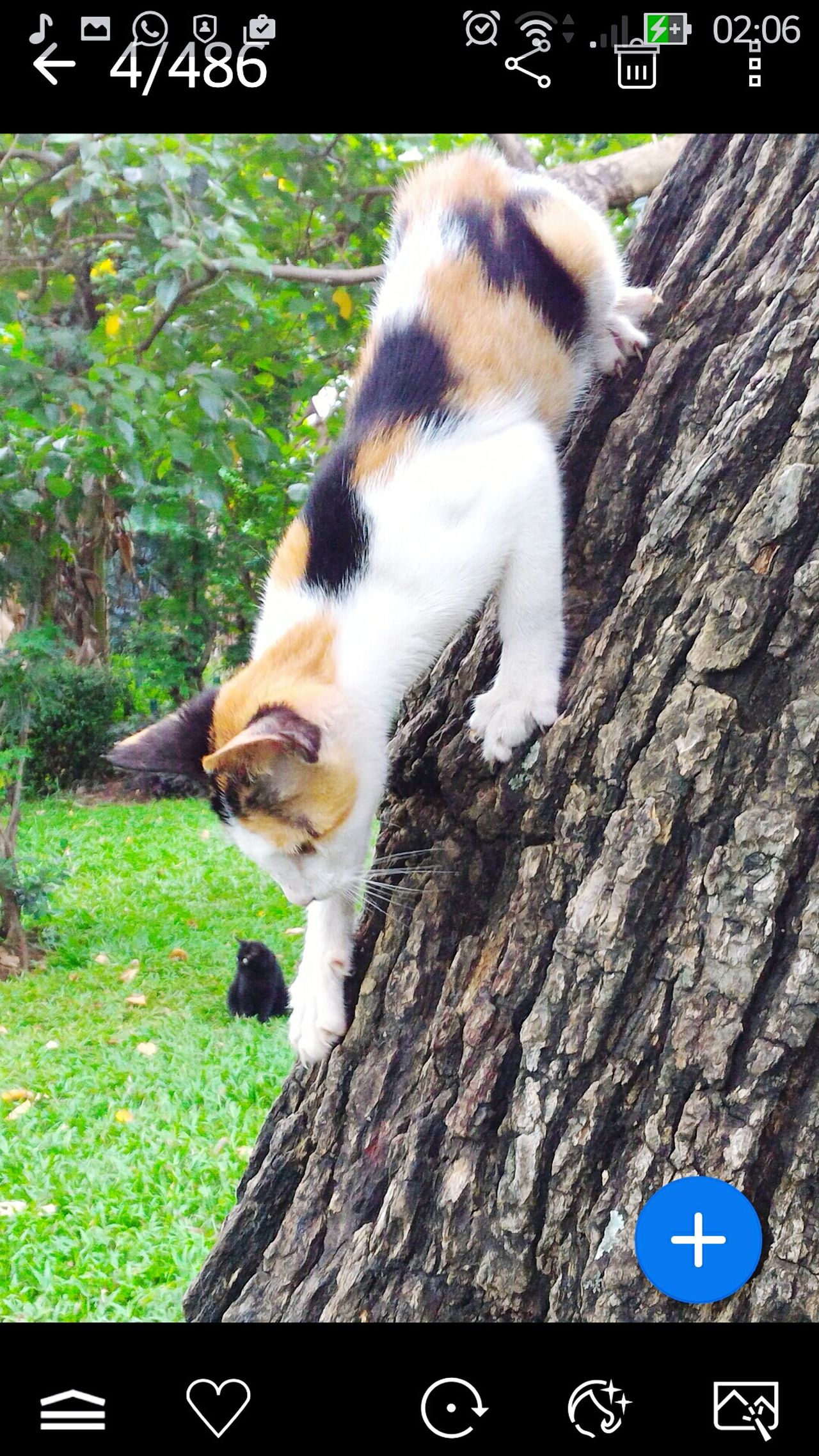Cat And Tree Cat♡ Cats Of EyeEm Cats 🐱 EyeEm Gallery Animal Themes Week On Eye Em