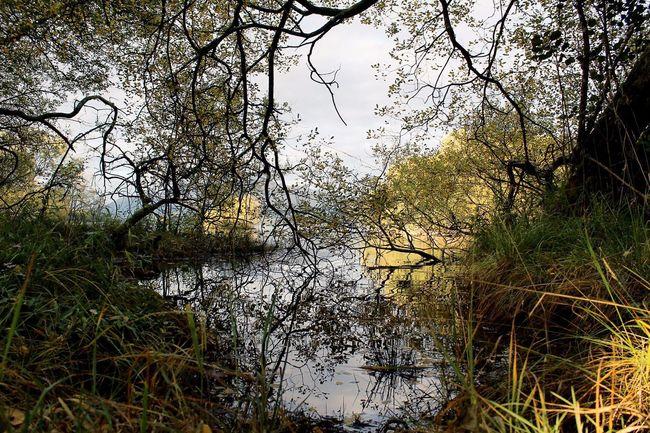 Tree Water Forest Branch Wilderness Remote WoodLand Nature Narrow Tranquility Stream LochLomond