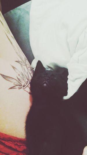 My baby cat ♡ Isis ♡ Relaxing Tattoo Cat Enjoying Life