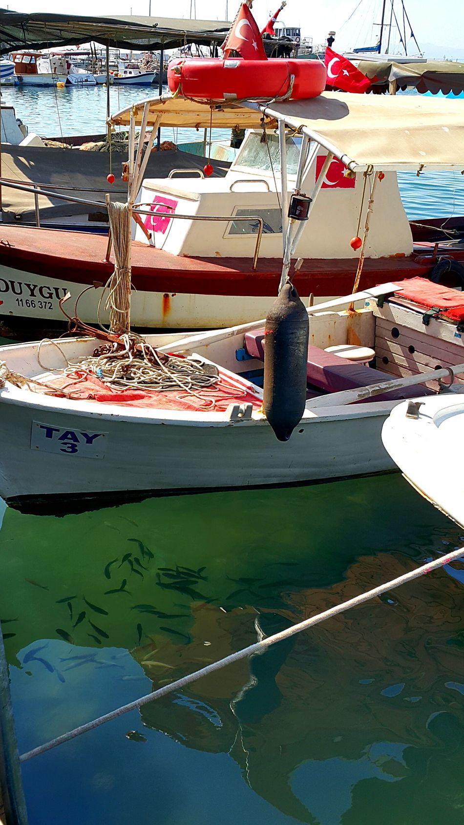 Tekne Tekneler Balık Balik Balıkçıtekneleri Iskele Burhaniye Balıkesir Balikesir Balıkesirturkey