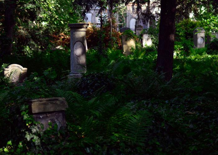 Cemetery Cmentarz Cmentarzżydowski Grave Ivy Overgrown Shadow Tomb Tranquil Scene Tranquility
