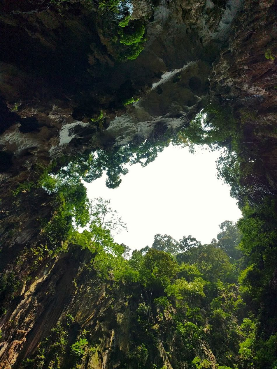 Batu Caves -Malaysia No People Growth Outdoors Beauty In Nature High Angle View Sunlight Rock - Object Growth Tree Nature Day Water Sky