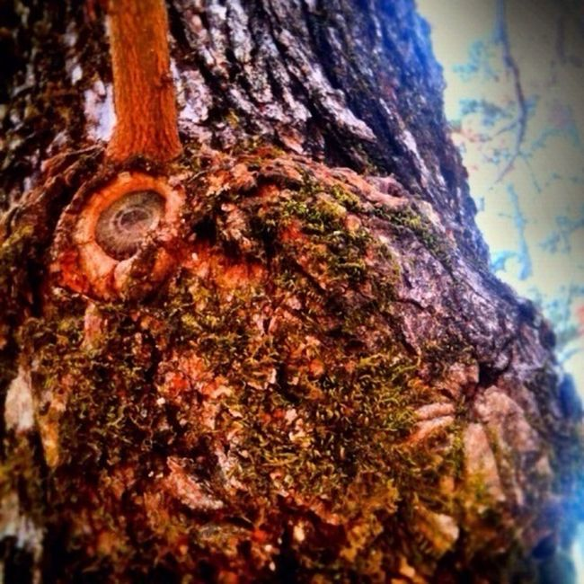 An Ent at the Park!