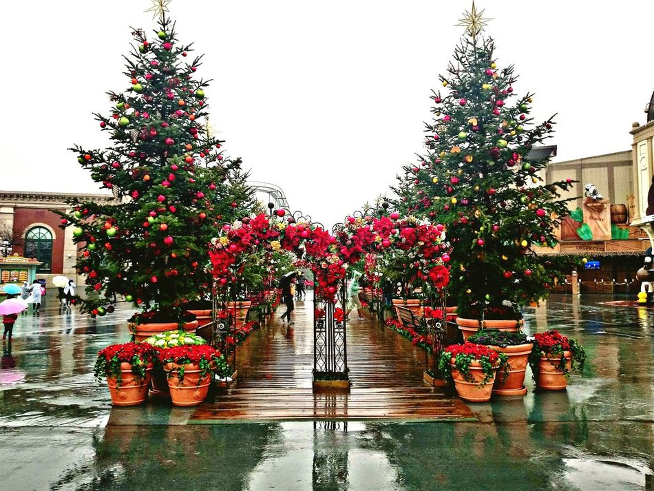 Somewhere down the rain. Childsplay<3 Everland Rainy Morning Flowers Christmas Tree